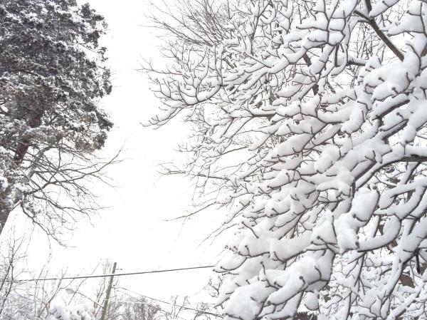 Snow 2015 (c) MMD